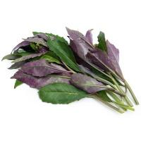 春播农庄有机栽培紫背天葵100g