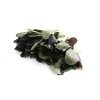 春播安心直采紫油菜300g
