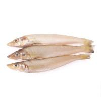 春播冰鲜水产海南野生沙丁鱼450-500g