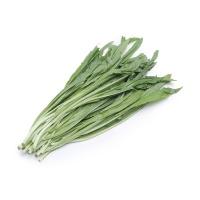 春播安心直采油麦菜300g