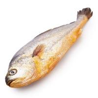春播冰鲜水产大黄鱼(400-550g)1条装