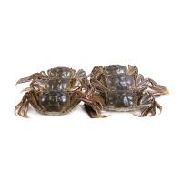 2017春播杜金诚养殖固城湖大闸蟹礼盒D(公蟹3.3-3.6两/只、母蟹2.6-2.9两/只)各4只