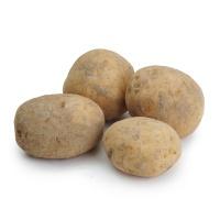 春播安心直采有机土豆500g