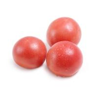 王美兰栽培粉果西红柿450-500g