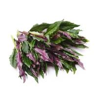 春播安心直采紫背天葵300g