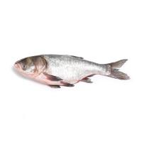 连环湖野生胖头鱼2kg