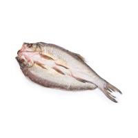 丹江口翘嘴鲌鱼(350g-400g)