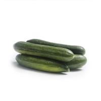 春播农庄有机栽培丑绿贵人乳黄瓜400g