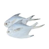 马来西亚野生海捕小白鲳鱼300g(5条装)