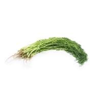 分享收获农庄茴香300g